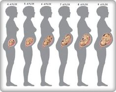 Male Puberty Growth Baby Growth Month By Month Fetus Size By Month Pregnant Stomach Chart Belly Growth Chart For Pregnancy Development Chart By Month Third Pregnancy, Trimesters Of Pregnancy, Pregnancy Months, Pregnancy Stages, Pregnancy Workout, Pregnancy Tips, Pregnancy Photos, 5 Months Pregnant, Pregnancy Timeline