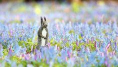 童話の世界みたい…「春の妖精」の中にエゾリス