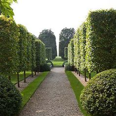 Is It PLEACHING NO, But this shaped topiary like trees gives that Pleaching effect with out the feeling of walls. Another good thing for a small yard maybe?