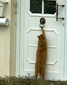 Smart Alec! I had one who used to put his paws around the door knob and try to turn it.