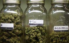 Senate Panel OKs Letting VA Docs Give Advice on Medical Pot   High Times