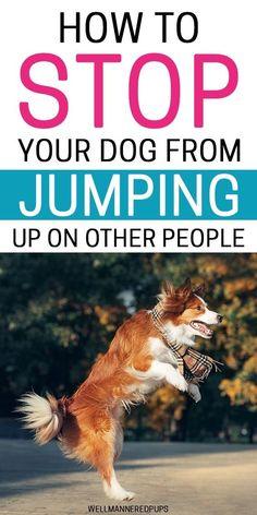 dogtrainingtips #dogtrainingisfun #dogtrain #dogtraining #dogbehaviour #obediencetraining #trainyourdog #dogtrainersofinstagram #dogtrainingvideo #servicedogtraining #puppytrainer #dogwhisperer #balanceddogtraining #doglanguage #dogproblems #dogtrainer #puppytrainingtips #puppytraining101 #huskygram #huskyheaven #huskysmile #huskypuppies #huskylovers #huskystagram #huskyloversunite #huskyofinstagram #huskylovingclub #huskyx #huskyproblems Dog Training Techniques, Dog Training Videos, Puppy Training Tips, Best Dog Training, Brain Training, Dog Training Near Me, Dog Training Treats, Puppy Care, Dog Care