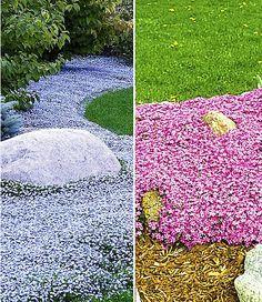 Die 29 Besten Bilder Von Hangbepflanzung Landscaping Flower Beds