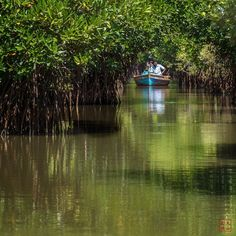 #SMK #dashansheying.net #India #Chennai #Fujifilm #XPro-2 #Fujixpro2 #Pichavaram #Mangroves