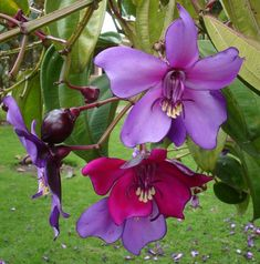 Rare Exotic Flowers | Rare and exotic plants & seeds ♥ Beautiful flowers :) garden gardening pretty cool fashion design flower