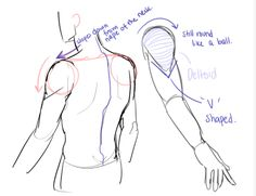 Anonymous said: Could you make a tutorial on how to draw shoulders? I struggle so much with them. Thank you so much! Answer: of course! Shoulders are really just two balls attached to the collar bones...