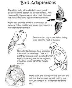 bird adaptations