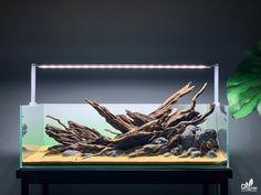 Biotope Aquarium, Aquarium Fish, Betta Tank, Fish Tank, Aquarium Landscape, Aquascaping, Aquariums, Turtle, Plants