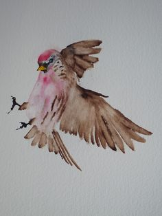 Redpoll in Flight