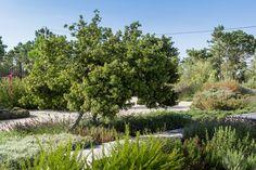 Garden in the dunes  Project by Topiaris