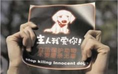 10dogs are being slaughtered for dog meat festival. How much blood is that? PLEASE SIGN PLEDGE TO BOYCOTT CHINA. PLEASE!