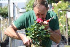 wanneer de rozen net open zijn, kan je hun echte geur het best ruiken.