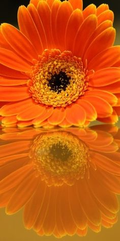 "500px / Photo ""Flower Reflection"" by John Velocci"