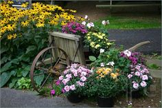 ... of A flower garden display with blooms and an old wooden wheelbarrow