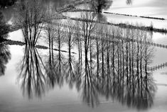 """""""Naked trees in flooded fields"""" by Hercules Milas"""