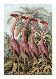 Florida Coast Flamingo Family Pink Home Decor Digital Art Pink Flamingos Birds, Flamingo Bird, Pink Bird, Flamingo Print, Flamingo Bathroom, Pink Home Decor, Coastal Decor, Bird Wall Art, Picture Gifts