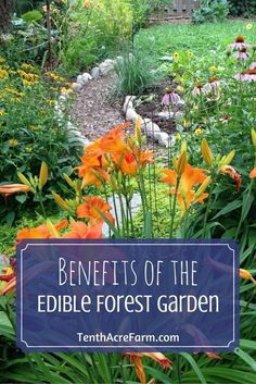The vision of a backyard vegetable garden conjures up visions of rectangular raised beds in full sun. Learning the basics of an edible forest garden helped me learn how to grow lots of produce in a sloping, shady, not-ideal-for-gardening, backyard.