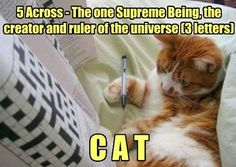 What a clever kitty!