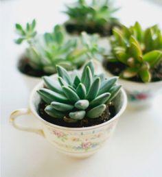 On connaissait la bougie dans une tasse, récemment vue chez H&M Home, on a maintenant la plante grasse ou le cactus plantés dans des tasses !...