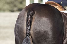 Tips for a Beautiful Tail