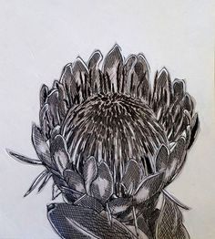 Hermien Van Der Merwe; Title: Fynbos:  Gesnoei (Pruned) Medium: Pen-and-Ink drawing on paper with oil paint background Size:200 x 200mm