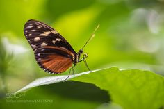 Butterfly by xpres. @go4fotos