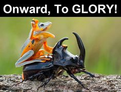 21 Perfectly Captioned Animal Photos That Will Have You LOLing | Diply