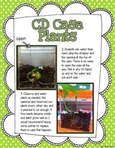 Grow seeds in CD cases. Learn all about the parts of a plant!