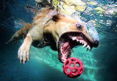 """Underwater Dogs"" by Seth Casteel"