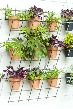 Vertical Garden Design, Home Garden Design, Backyard Garden Design, Garden Gazebo, Garden Yard Ideas, Side Garden, House Plants Decor, Plant Decor, Backyard Vegetable Gardens
