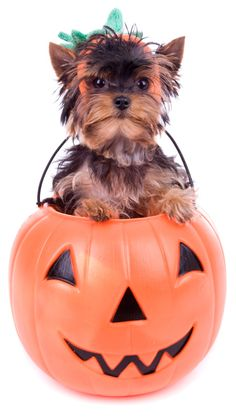 Pumpkin is a great treat for dogs and cats, full of antioxidants and with only 21 calories per half cup (canned). Try this Pumpkin Dog Biscuit recipe for a tasty, seasonal snack