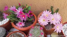 cactus-y-suculentas-tarjetas-imprimibles7