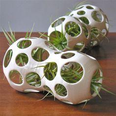 Air Plants in unique vases