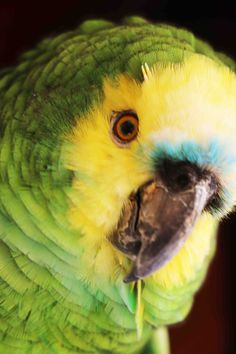 visit the amazing Bird Park. Iguassu Falls Brazil.