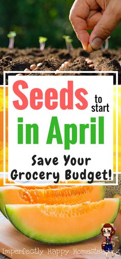 GARDEN FOR GROCERIES! 20 Seeds to Start in April and Save Your Grocery Budget. Zones, 1 - 10