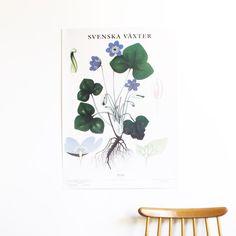Blåsippa Office Supplies, Cute, Posters, Shop, Home Decor, Little Cottages, Home, Kawaii, Poster