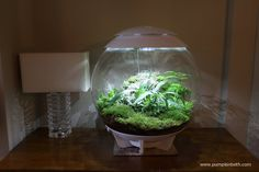 Size does matter and I've received quite a few questions asking how big the BiOrbAir is. I have taken some photos to clearly show the size of the terrarium.