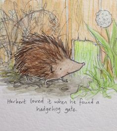 If your garden is enclosed by fences, make a hedgehog gate, so they can come and eat your slugs, and will be able to escape too.