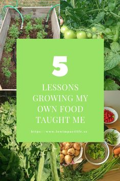 Growing your own food gives you great insights on viewing your food as the precious resource it is Grow Your Own Food, Homesteading, Insight, Teaching, Life, Education, Onderwijs, Learning, Tutorials