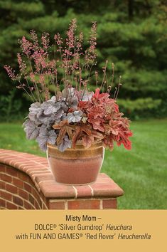 25 Best Perennials For Containers Images Container Garden Potted