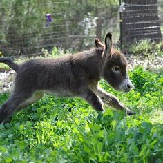 Baby Donkey! That'll do Donkey, that'll do indeed. #squishable #plush