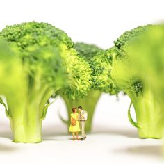 Øystein Dypedal - Broccoli Forrest Photo print Signed and numbered 70 x 50 Edition: 30 Price: 1500 kr 50 x 40 Edition: 30 Price: 1000 kr Vegetables, Image, Kunst, Pictures, Vegetable Recipes, Veggies
