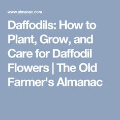 Daffodils: How to Plant, Grow, and Care for Daffodil Flowers | The Old Farmer's Almanac