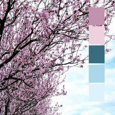 Time To Celebrate, One Design, Cherry Blossom, Color Inspiration, Behind The Scenes, Fire, Japan, Seasons, Photo And Video