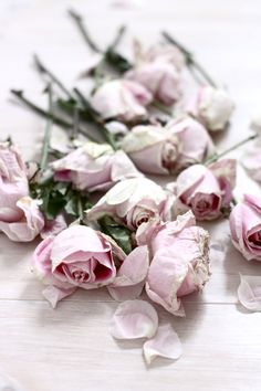 ♥ pink roses