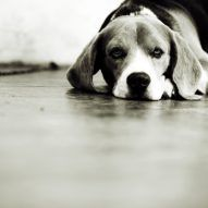 Should I let my pet die at home? | Dr. Justine Lee | Dr. Justine Lee Cute Animal Pictures, Dog Pictures, Cat Vs Dog, When They Cry, Dog Died, What Dogs, Best Pet Insurance, Pet Home, Love Pet