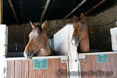 Les chevaux ont aussi leur logis