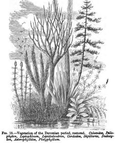 The Geological History of Plants, by Sir J. William Dawson, a Project Gutenberg eBook. Paleo, Jurassic Park Tattoo, Fossilized Wood, Dinosaur Art, World Images, Prehistoric Animals, Prehistory, Fantasy World, Rocks And Minerals