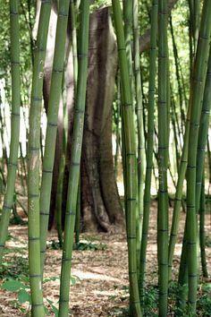 Bambouseraie d'Anduze (30)