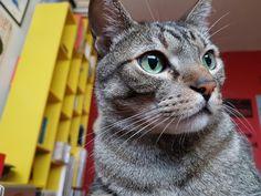 #cat #pet #gato